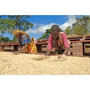 タンザニア「ブラックバーン農園」ピーベリー シティロースト200g